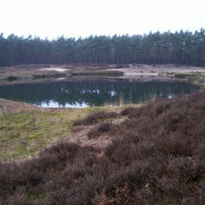 Moorschlatts und Heiden in Wachendorf